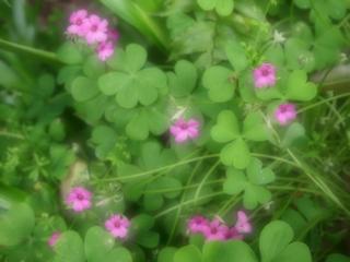 新緑の花たち.png