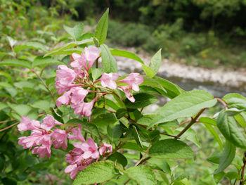 櫻の時期は過ぎたけど色々咲いています.jpg